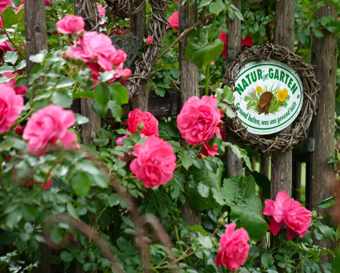 NIG_HAIDEN_2548_Natur_im_Garten_Alexander_Haiden.jpg