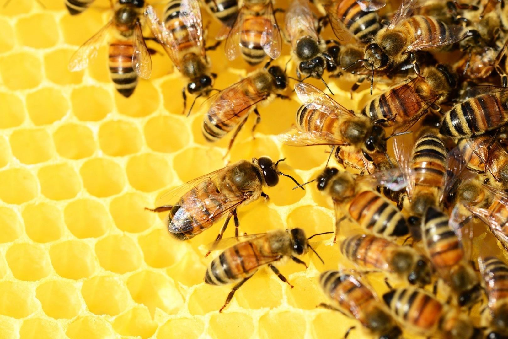 bees-326337_1920.jpg